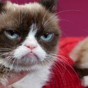 Mürrischste Katze der Welt stirbt mit 7 Jahren (Foto)
