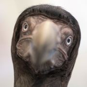 DIESE Tiere hat die Menschheit ausgerottet (Foto)