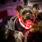 Extra eingeschläfert! Tote Besitzerin mit Hund bestattet (Foto)