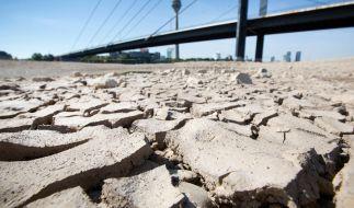 Wird der Sommer 2019 schlimmer als der im Vorjahr? (Foto)