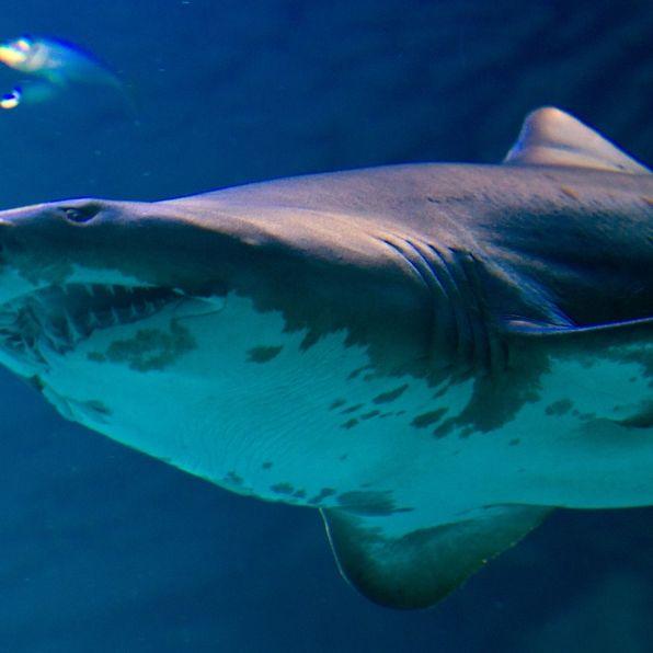 Hai frisst Mädchen (17) Bein und Finger ab (Foto)