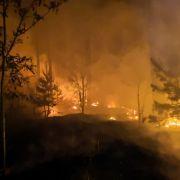 Waldbrandgefahr in Deutschland – diese Strafen drohen bei Brandstiftung (Foto)