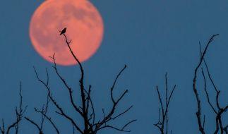 Ist der Erdbeermond ein Zeichen für den Weltuntergang? (Foto)