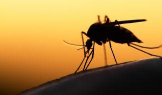 Der Insektenstich entpuppte sich als Weichteilkarzinom. (Foto)