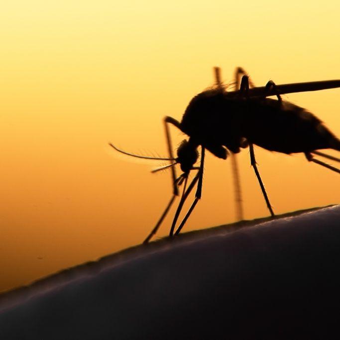 Insektenstich entpuppt sich als Krebs - Beinamputation! (Foto)
