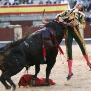 Der Stier hat den Torero mit seinem Horn aufgespießt. (Foto)