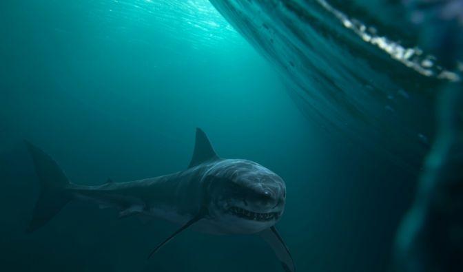 Hai-Attacke auf Boot
