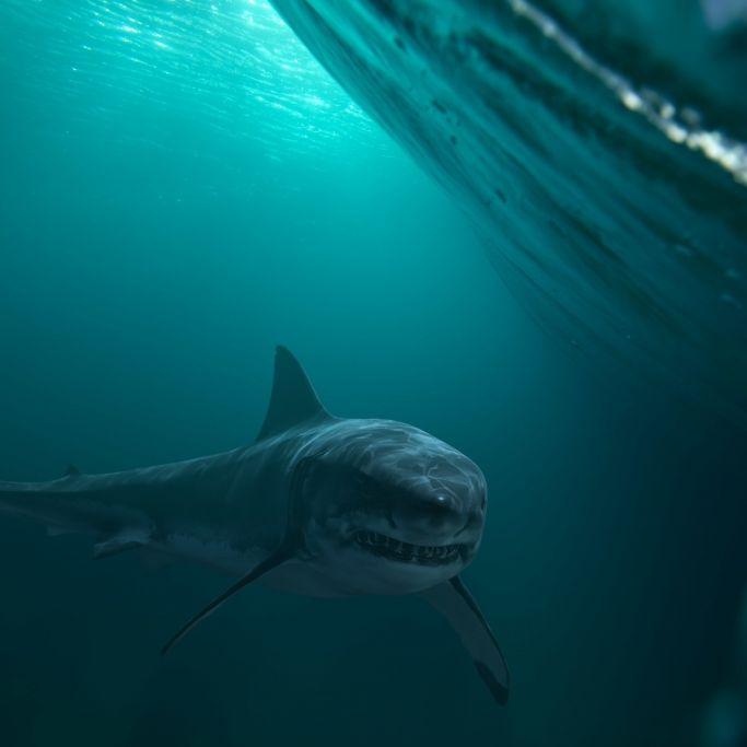 Schock-Video! Weißer Hai attackiert Fischerboot (Foto)