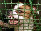 Tödliche Hunde-Attacke