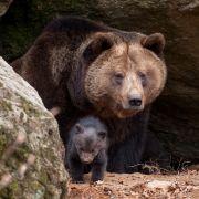 In Höhle verschleppt! Russe überlebt Bären-Attacke (Foto)
