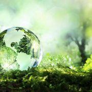 Wiederholung der Naturdoku im TV und online (Foto)
