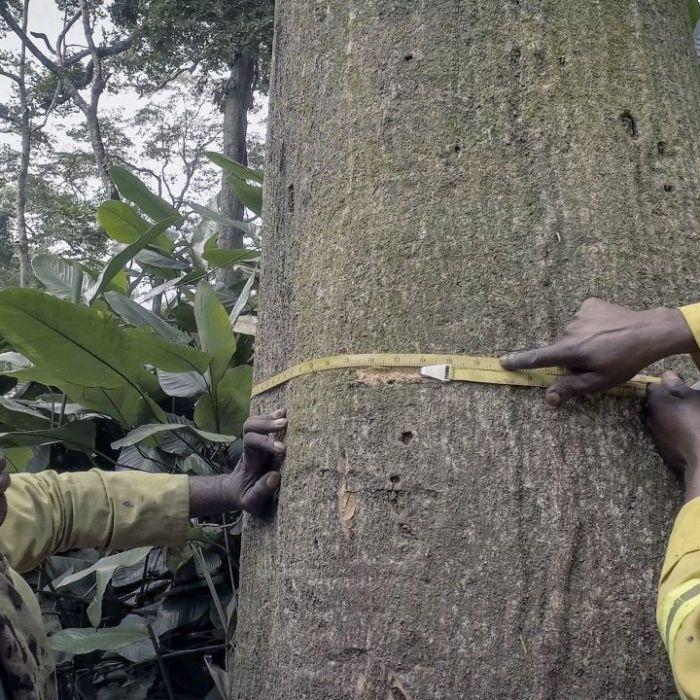 """Wiederholung von """"Kongo - Schutz für den Gorillawald"""" online und im TV (Foto)"""