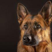 Mann erschlägt Hund mit Hammer - die Begründung macht sprachlos (Foto)