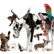Wiederholung der Tier-Reportage im TV und online (Foto)