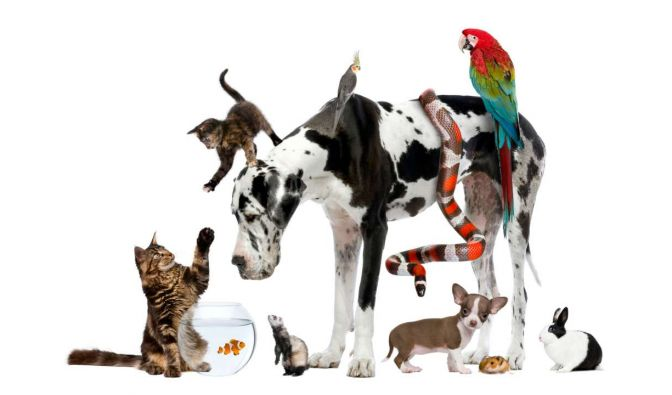 """Die Katzen-Kita"" vom Samstag"