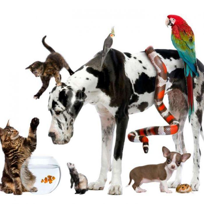 Wiederholung der Kinder-Tierserie online und im TV (Foto)