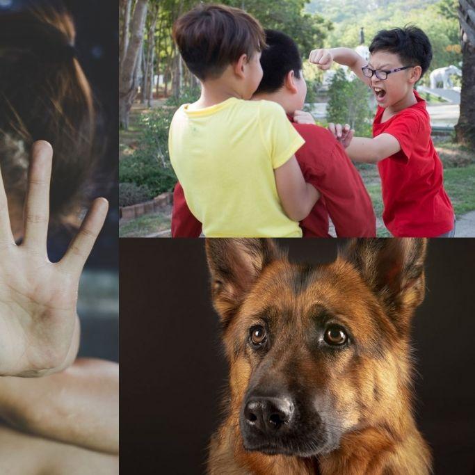 Unfassbar! Schwester geschwängert, Hund von Herrchen erschlagen (Foto)