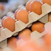 Entwarnung nach Produktrückruf - keine Salmonellen in Eiern gefunden (Foto)