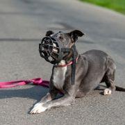 Hund zerfleischt wehrlosen Rollstuhlfahrer (61) - tot! (Foto)