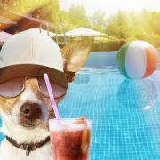 Hitze-Comeback mit 35 Grad! HIER wird es wieder Sommer! (Foto)