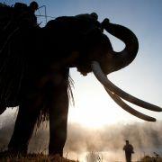 62-Jähriger in Nepal von wildem Elefanten getötet (Foto)