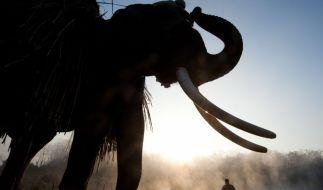 Wilde wie gezähmte Elefanten sind in Nepal keine Seltenheit. Sie werden als Arbeitstiere eingesetzt, leben aber auch wild in den Nationalparks, die immer kleiner werden. (Foto)