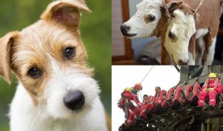 Ein Hund als Opfer von Tierquälern, Rinder mit zwei Köpfen und tödliche Tragödien im Freizeitpark - die Schocker-News der Woche machten betroffen. (Foto)