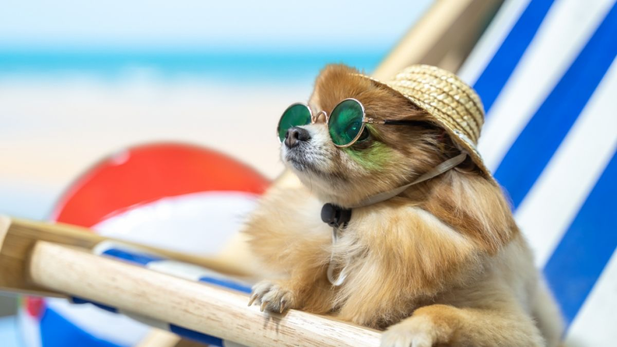 Wetter im Juli 2017: Achtung, 38 Grad erwartet! Hitzewelle kocht Deutschland