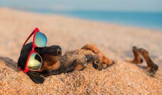 Wie heiß werden die Hundstage in Deutschland? (Foto)