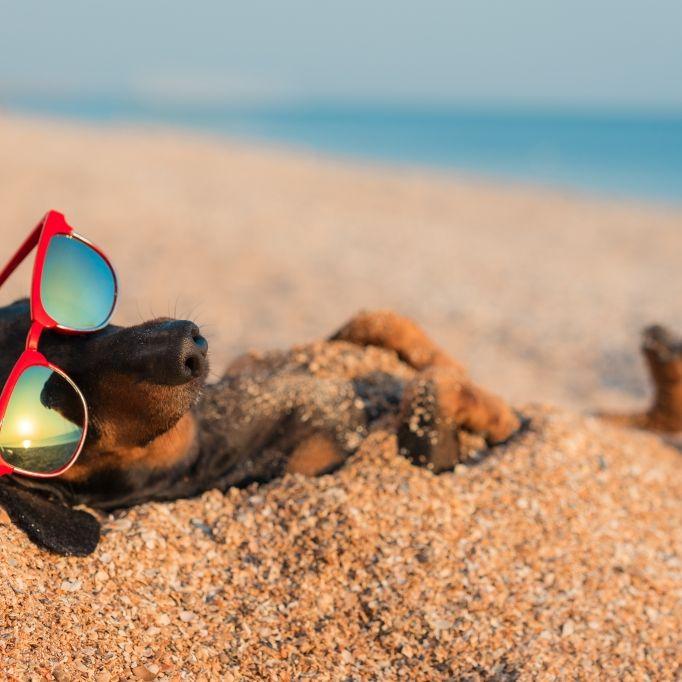 Hoch Yvonne bringt Hitzewelle! SO heiß werden die Hundstage (Foto)