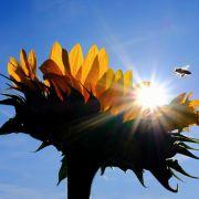 Neuer Hitze-Rekord mit 42 Grad Celsius! Hitzewelle rollt Höhepunkt entgegen (Foto)