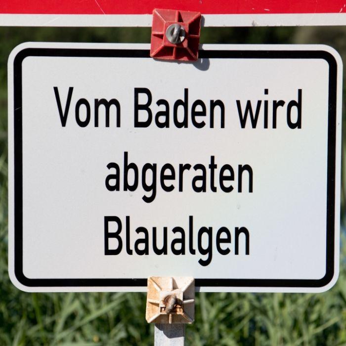 Gift-Alarm an der Ostsee! Wie gefährlich ist die Alge? (Foto)