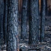 Waldbrände sind ebenfalls ein Resultat des Hitzesommers.