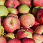 Obst als Keimschleuder? SO viele Bakterien stecken in Äpfeln (Foto)
