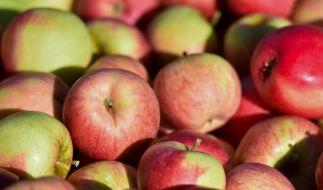 An apple a day für einen gesunden Darm - dank Bakterien und Viren. (Foto)