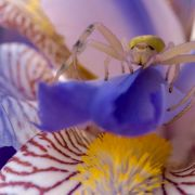Alien-Alarm?! DIESE Spinne hat ein Menschengesicht (Foto)