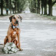Auf den Hund gekommen! Frau (49) heiratet Golden Retriever (Foto)