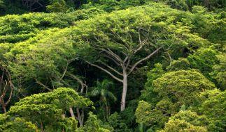 Unternehmen verschleiern mit Greenwashing das sie zum Beispiel den Regenwald abholzen. (Foto)