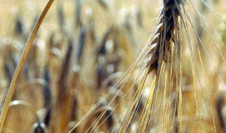 Auf einem Feld in Schleswig-Holstein ist ein totes Baby gefunden worden (Symbolbild). (Foto)