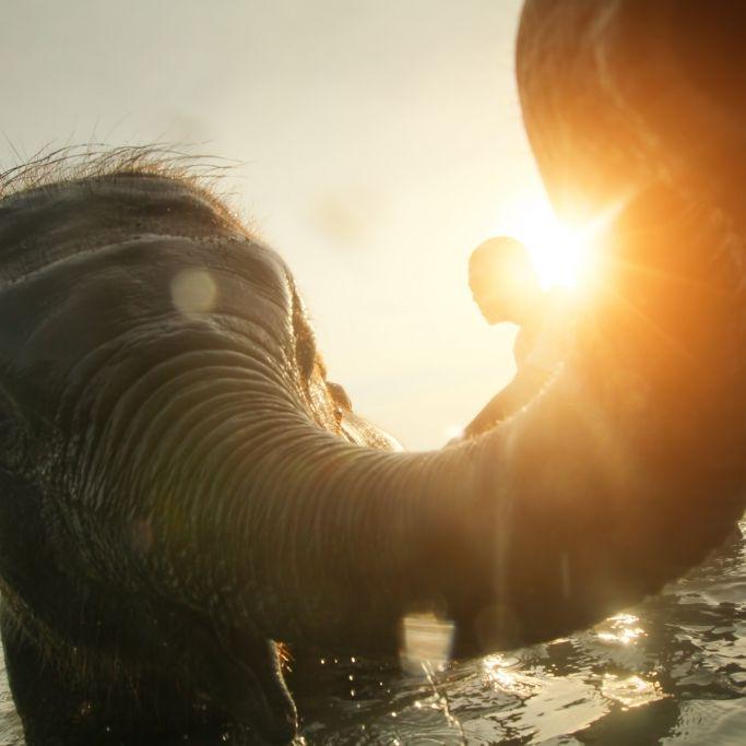 Elefant befummel halbnacktes Playboy-Model (Foto)