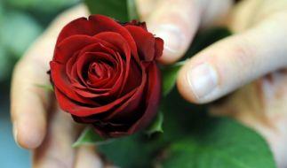 """Bei """"Die Bachelorette"""" 2019 wollen die Kandidaten nur eines: eine Rose aus den Händen von Gerda Lewis! (Foto)"""