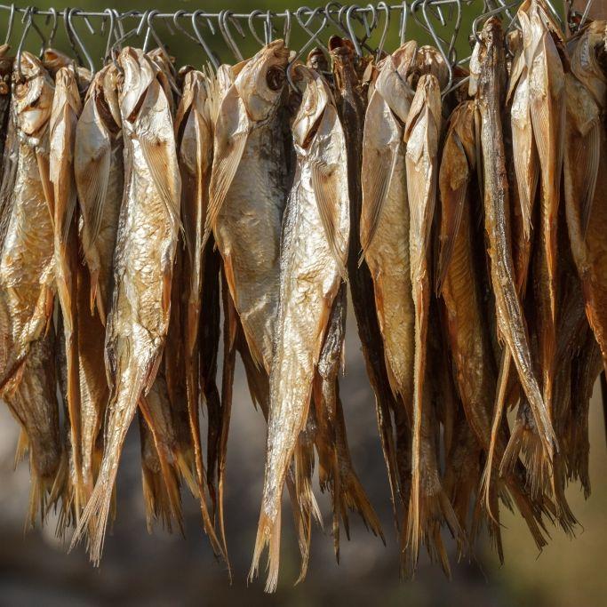 Lebensgefahr! DIESEN Fisch dürfen Sie nicht essen (Foto)