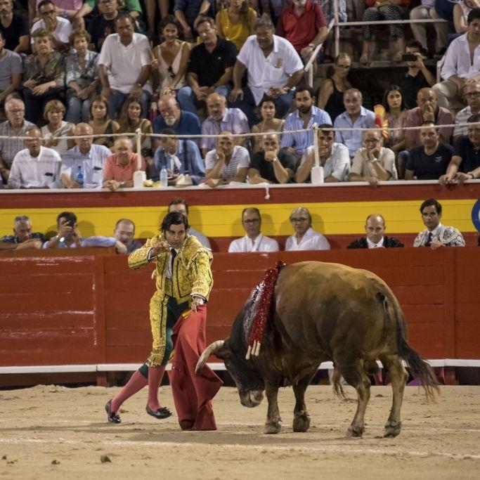 Tierschützer empört! Blutige Tradition lebt wieder auf (Foto)