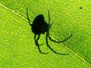 Spinnen-Horror in Österreich