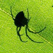 Mann (49) erblindet nach Spinnenbiss (Foto)