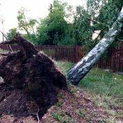 Gewitter und Starkregen haben am Sonntagabend in Deutschland mehrere Bäume umstürzen lassen.