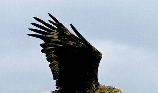 Der Flug des Seeadlers bei 3sat (Foto)