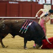 Brutale Horror-Szenen! Stier nimmt Torero im Schritt auf die Hörner (Foto)