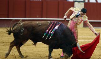 Ein altes Bild zeigt Paco Urena beim Stierkampf. (Foto)