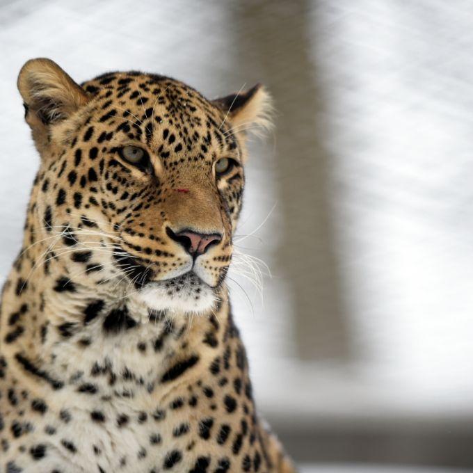 Schädel zertrümmert! Junge (2) von Leopard zerfleischt (Foto)